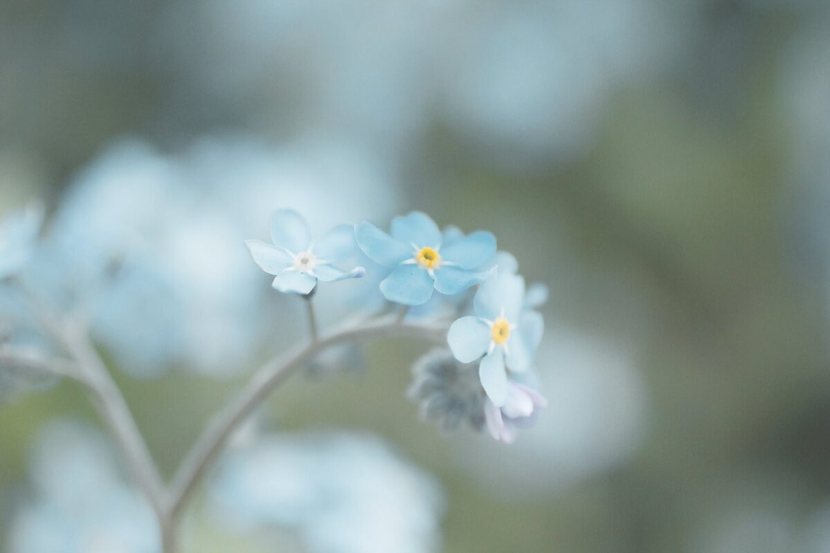 spring wedding flowers - forget me nots